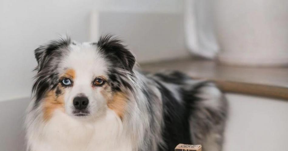 Best CBD Pet Products — Snacks, Oils, Chews & More Wallpaper